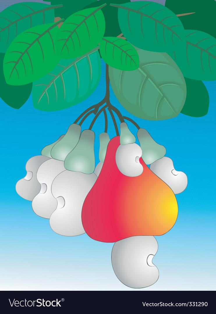 Cashew nut vector image