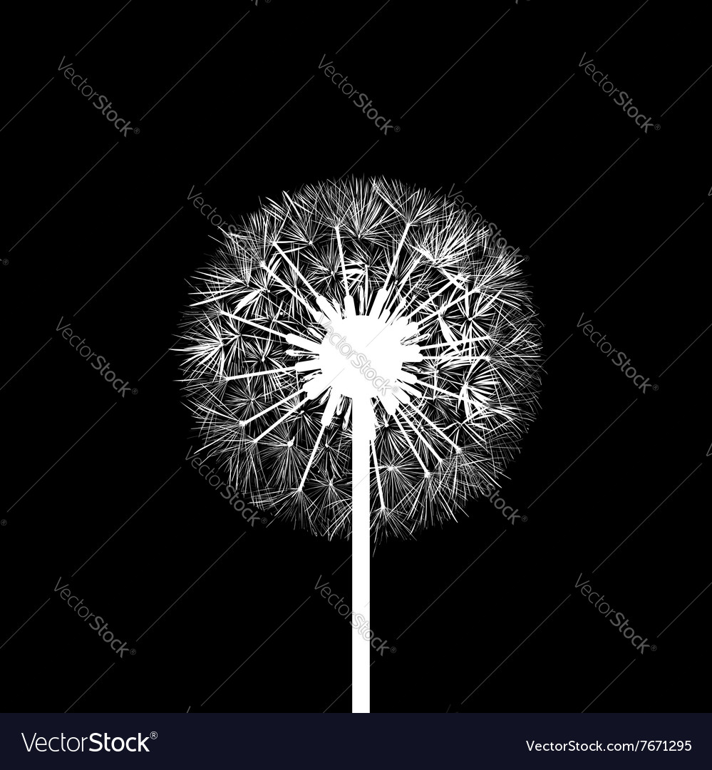 Dandelion flowers Stock vector image