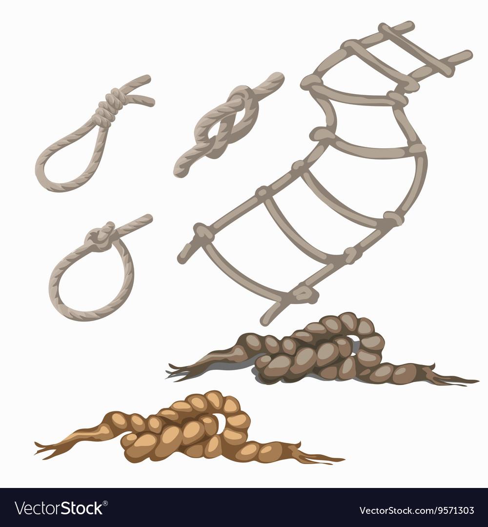 Set of rope elements ladder lasso knots loop vector image