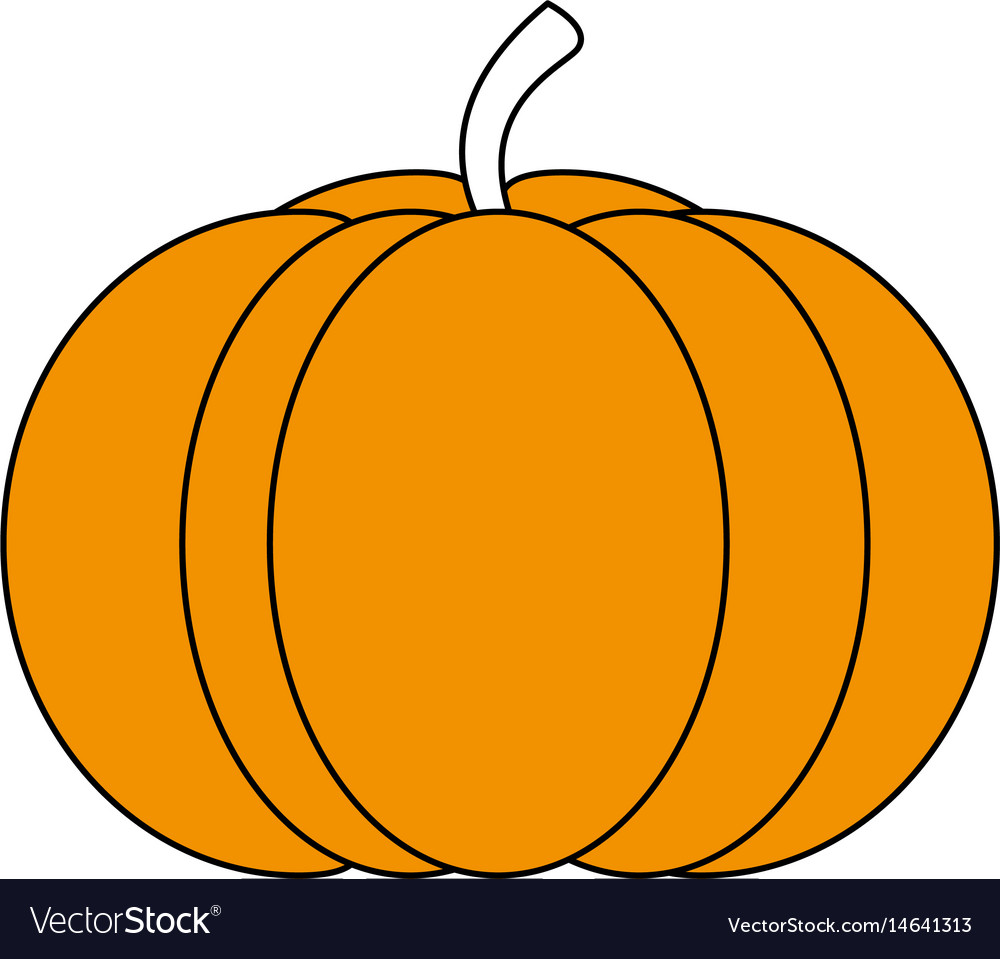 Sketch color silhouette pumpkin fruit food vector image