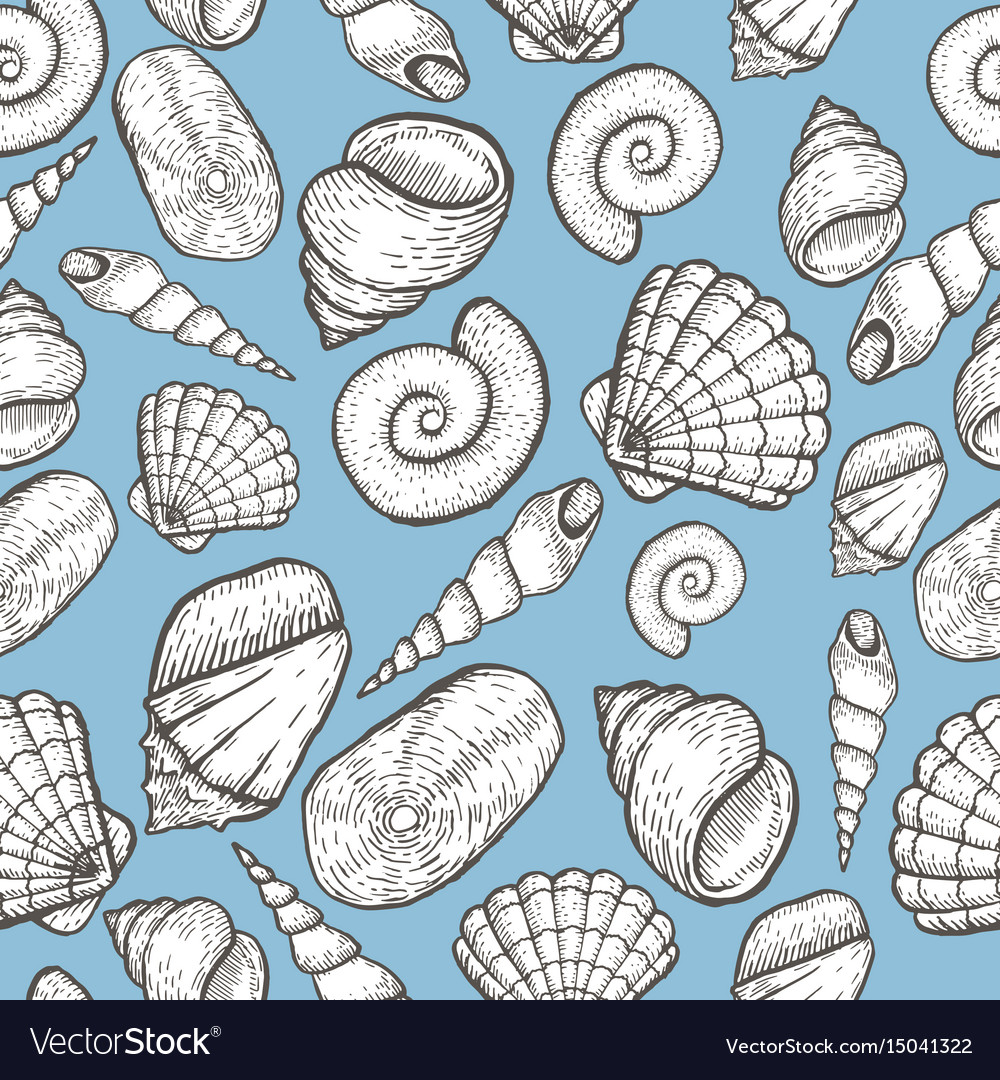 Seashell collection hand drawn aquatic doodle vector image
