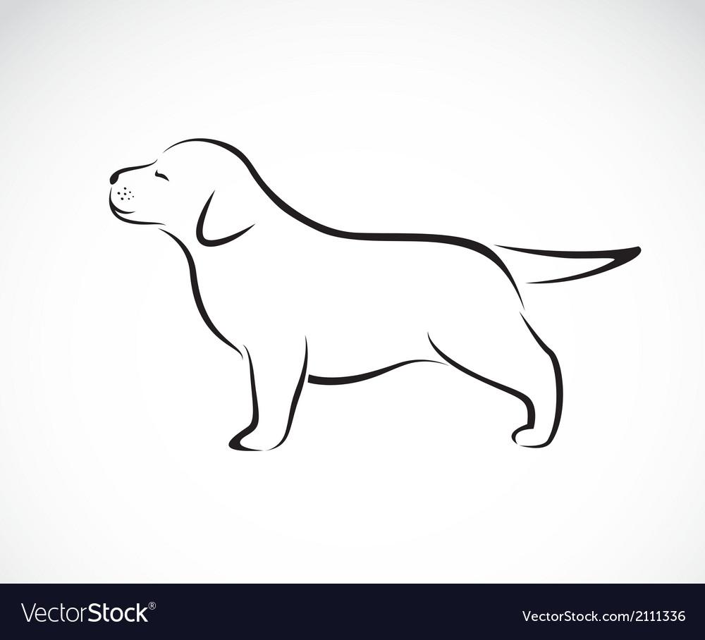 Labrador puppies vector image