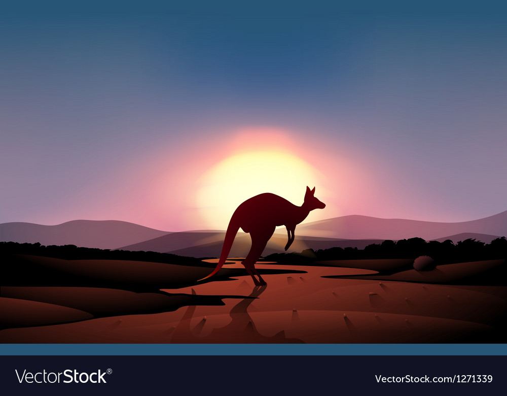 A sunset at the desert with a kangaroo Vector Image