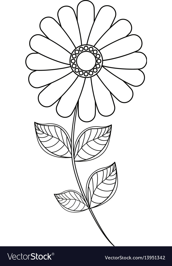 Flower daisy floral decoration line vector image