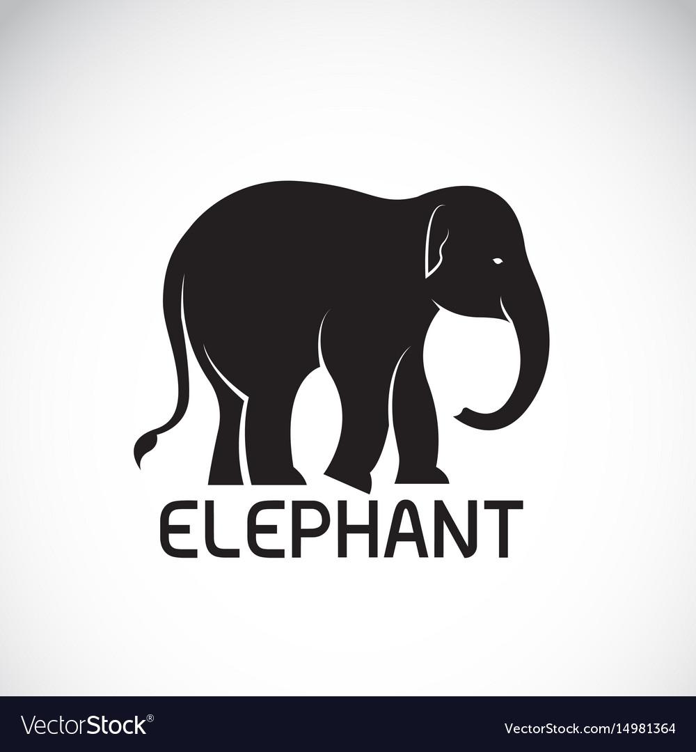 Elephant on white background wild animal vector image