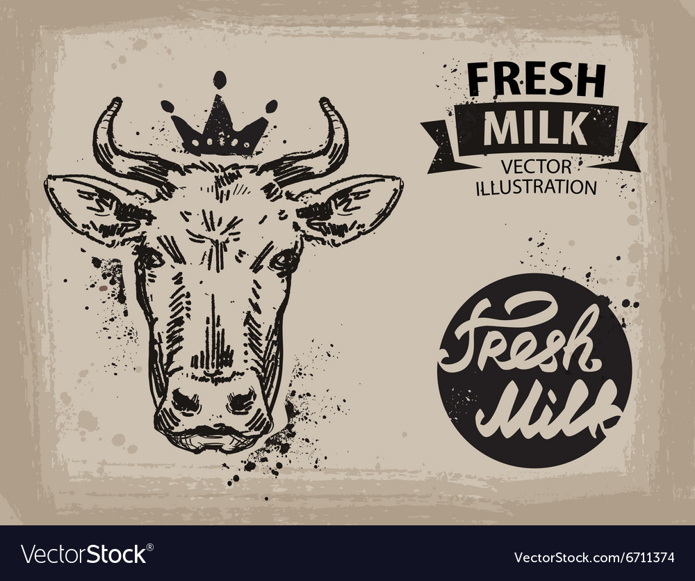 Cow logo design template beef milk or vector image