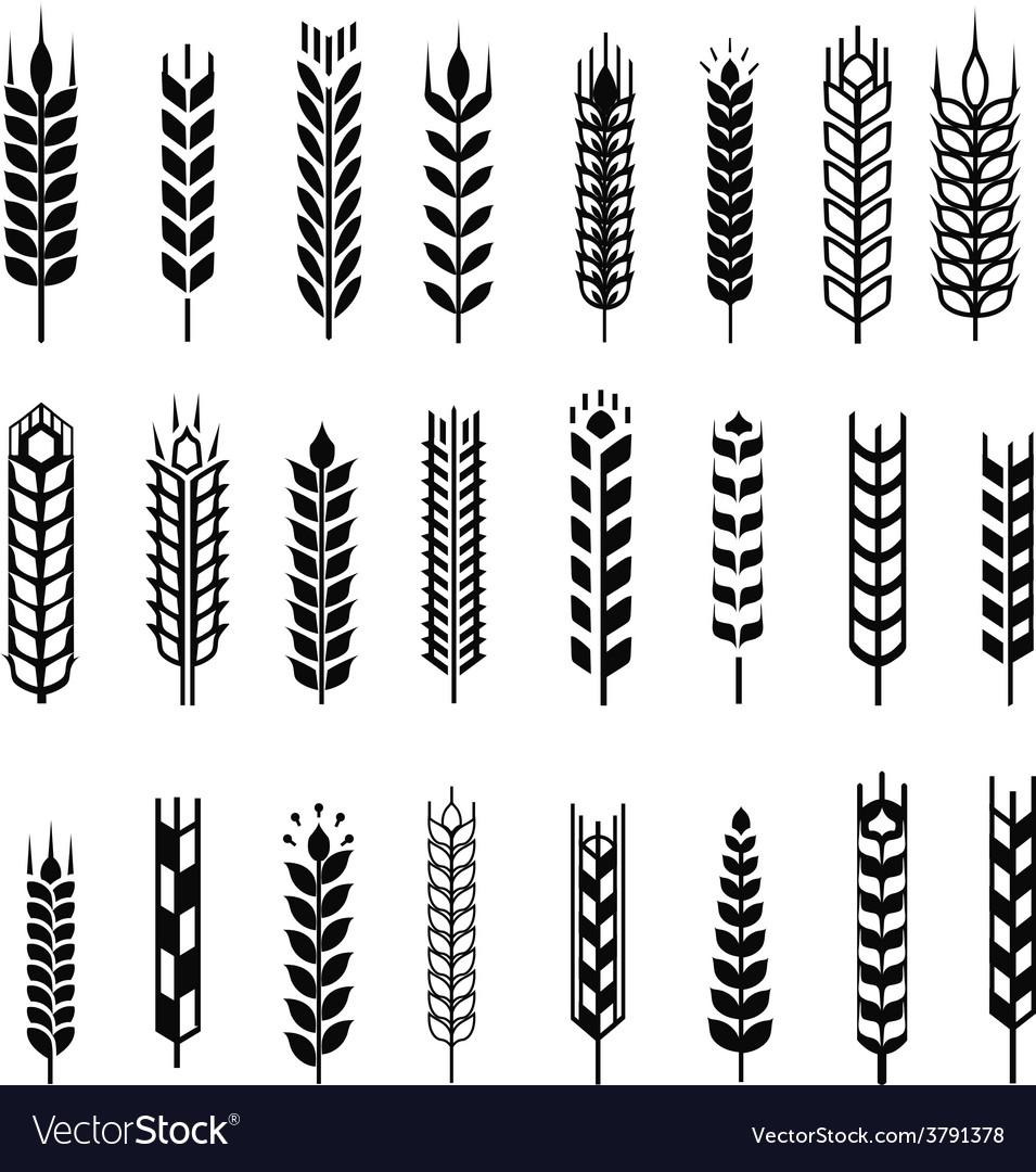Wheat ear icon set graphic design elements black vector image