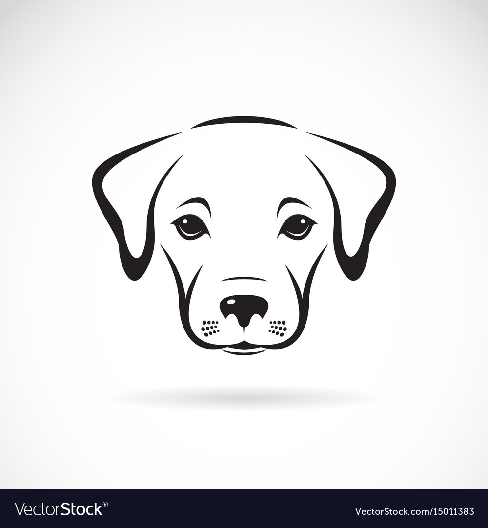 Labrador puppy face on white background dog pet vector image
