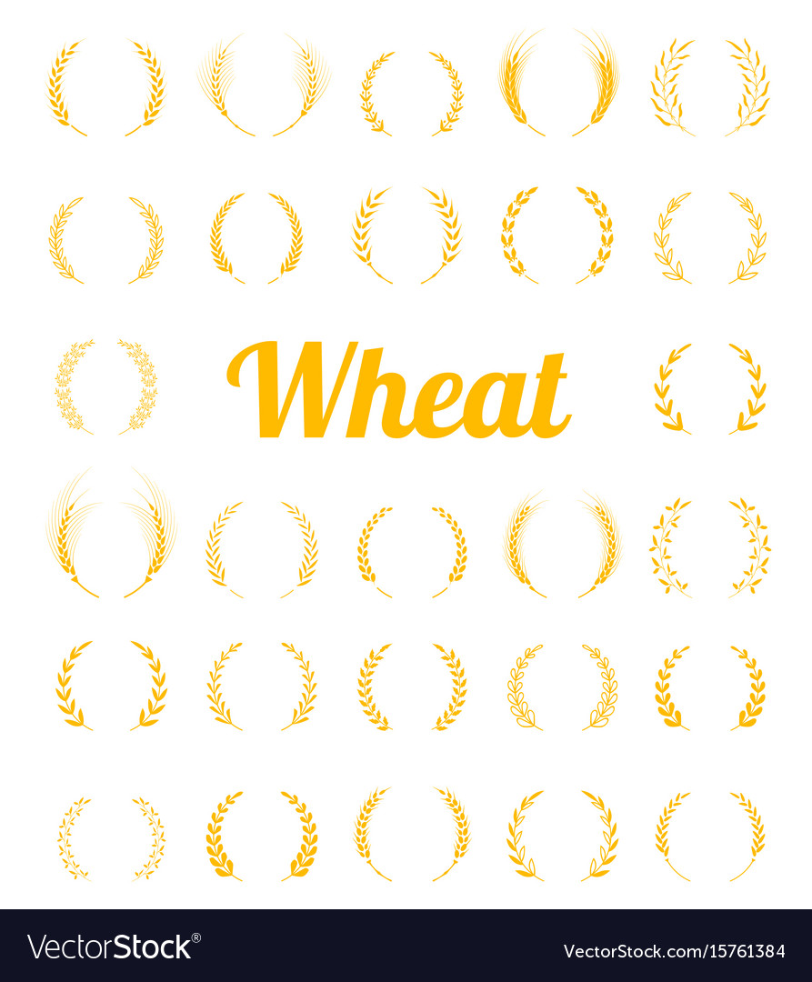 Gold laurel wreath - a symbol of the winner vector image