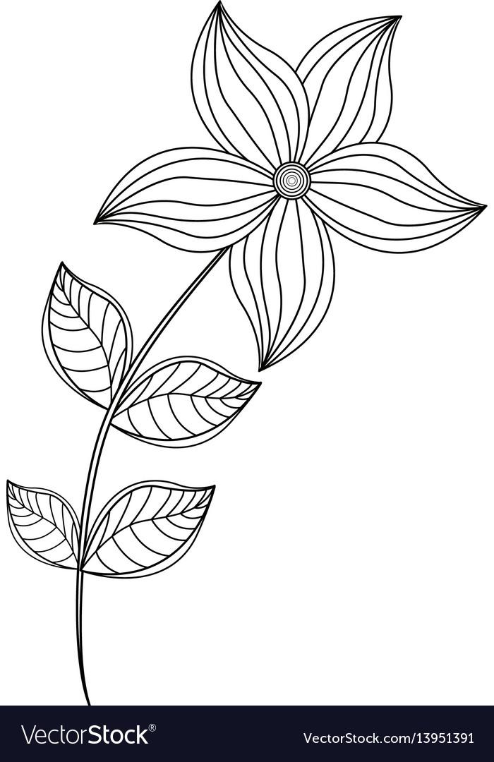 Flower garden decoration line vector image