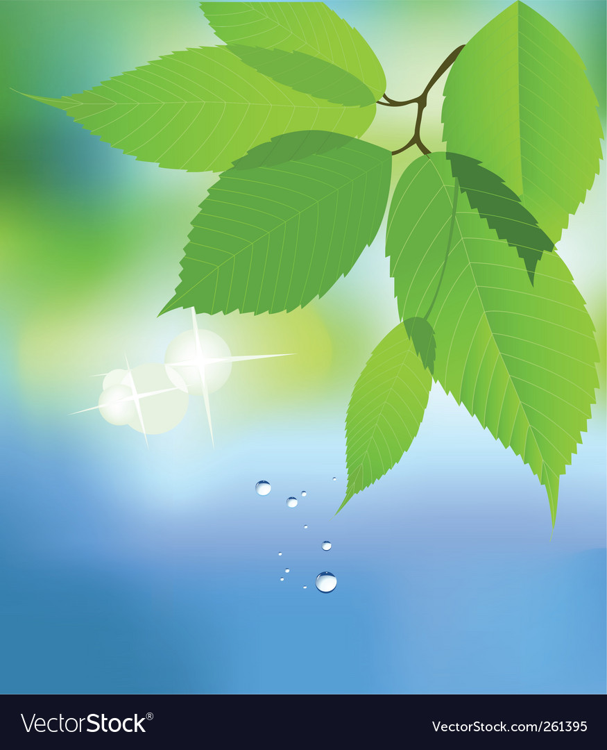 Leaf with water drop vector image