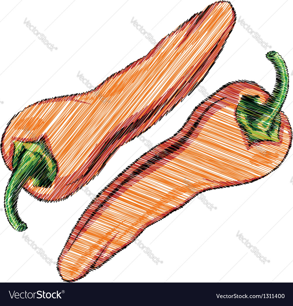 Chilli vector image