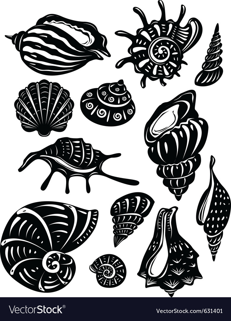 Set of decorative shell vector image