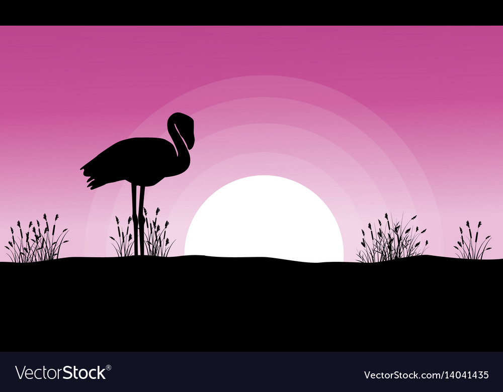 Flamingo at sunset landscape silhouettes vector image