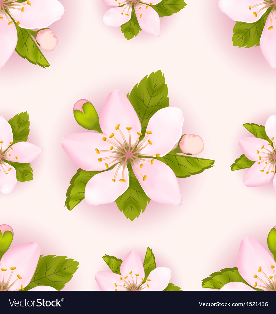 Seamless Pattern with Cherry Flowers Repeating vector image