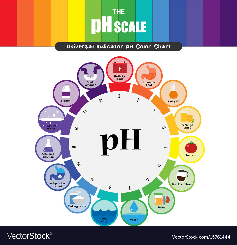 Ph scale universal indicator ph color chart Vector Image for Ph Scale Universal Indicator  303mzq
