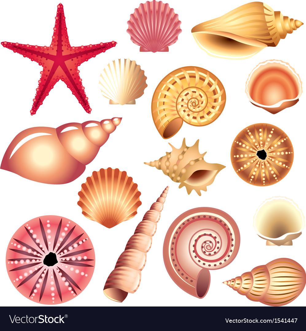Shells set Vector Image