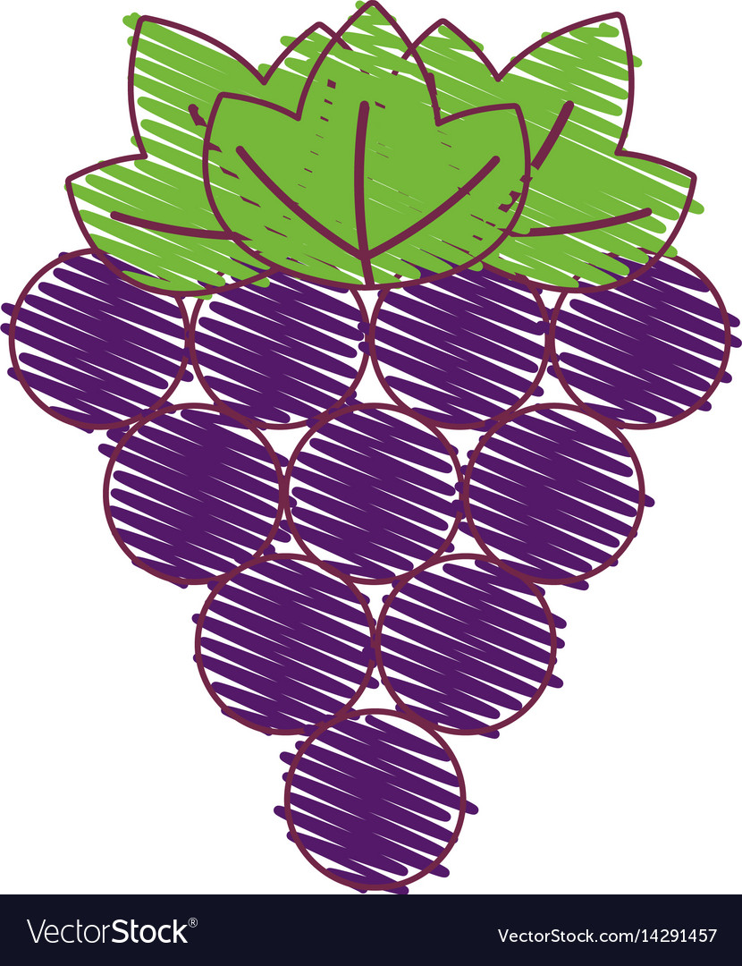 Purple grapes fruit icon image vector image