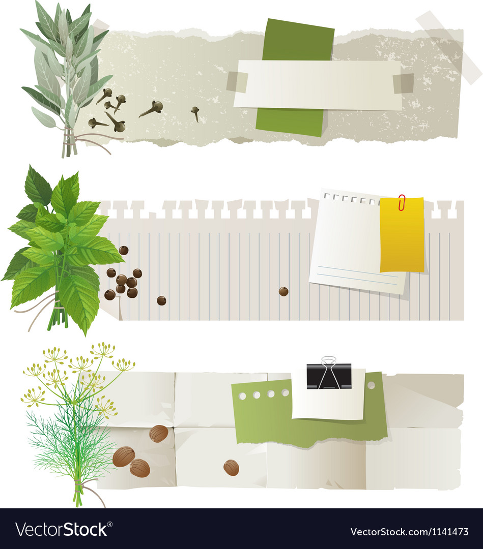 Herbal banners vector image