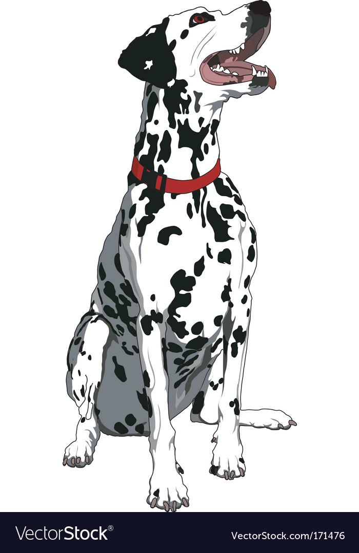 Obedient dalmatian vector image