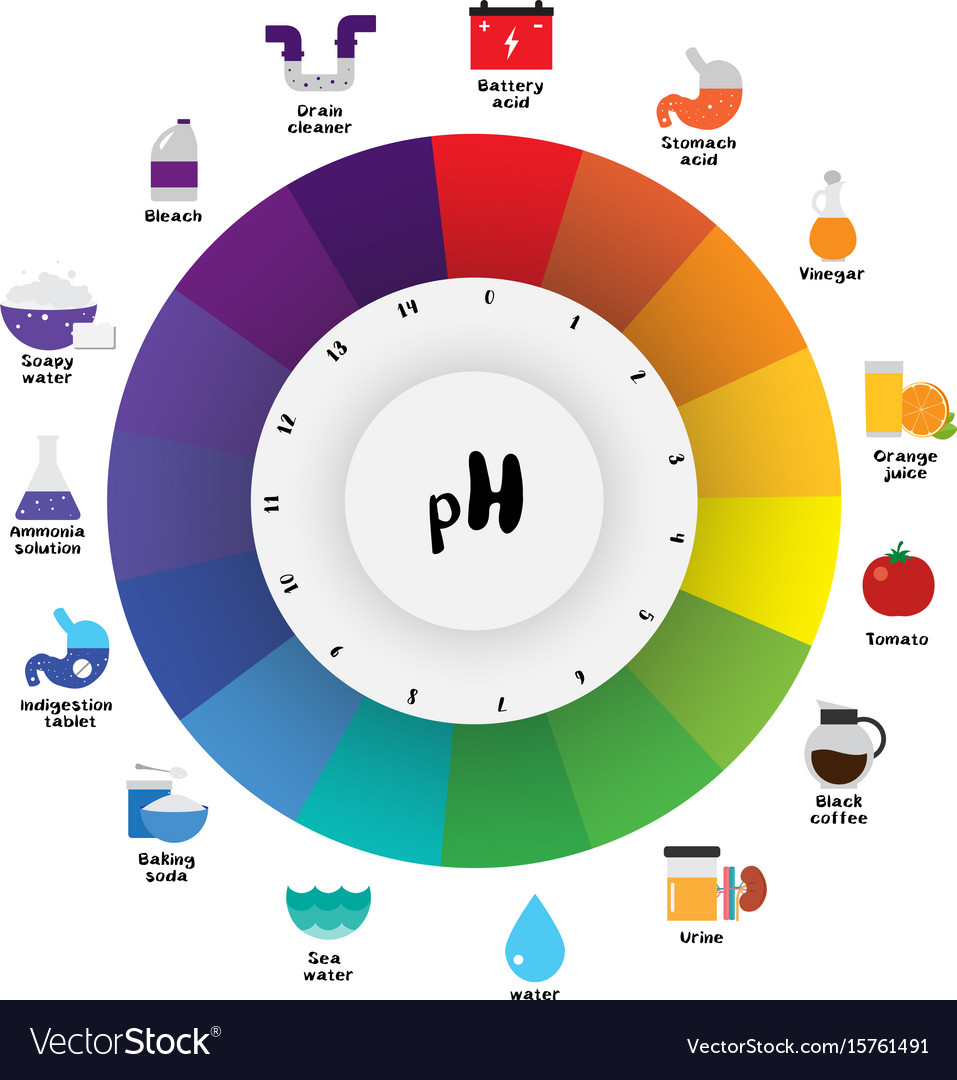 Ph scale universal indicator ph color chart vector image ph scale universal indicator ph color chart vector image nvjuhfo Images
