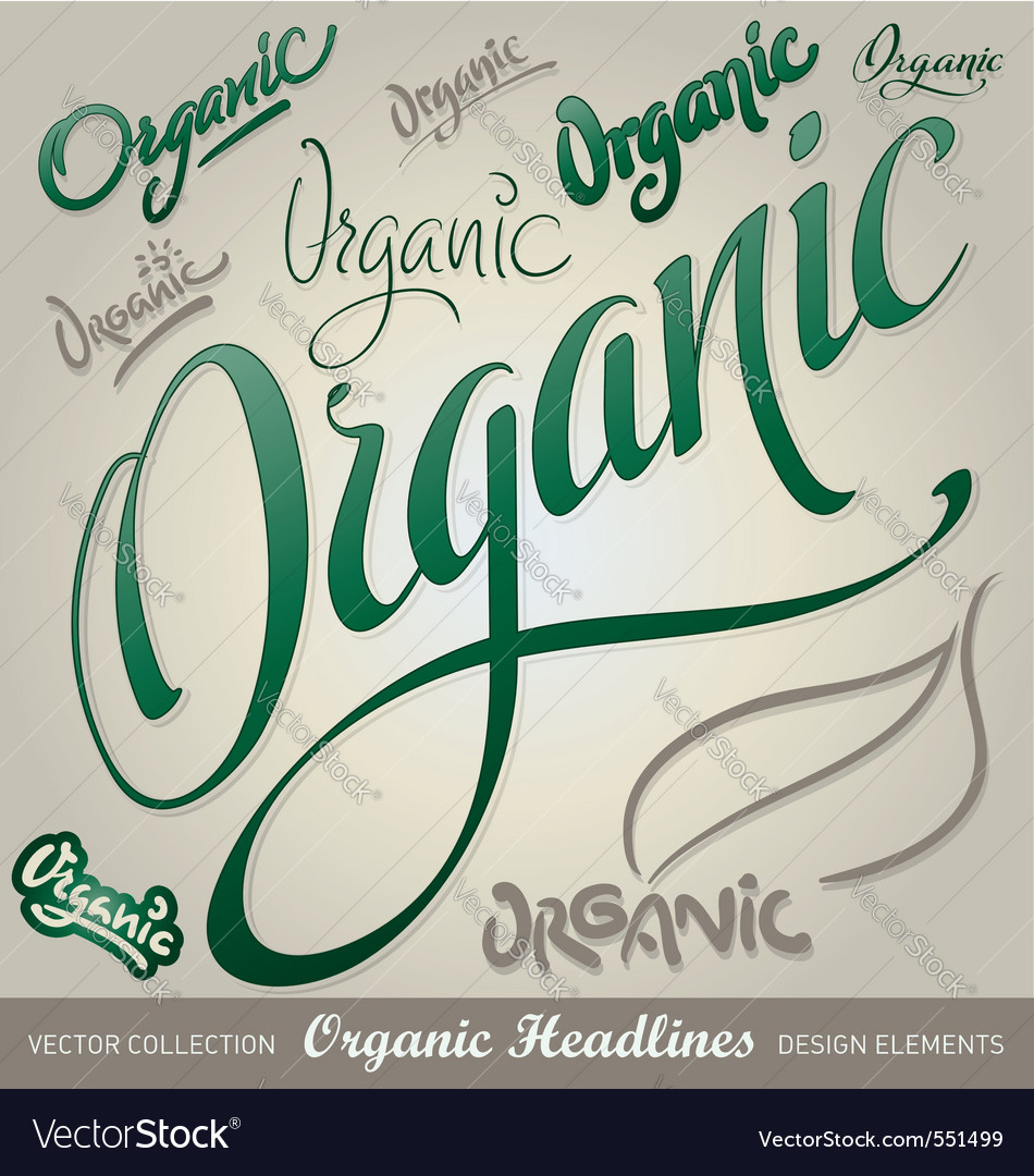 Organic hand lettering vector image