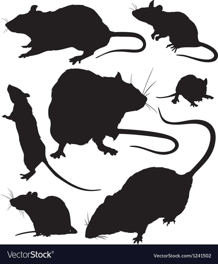 Rat silhouette vector image
