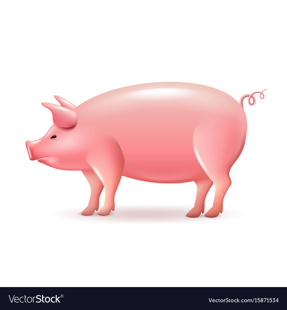 Pig side view isolated on white vector image