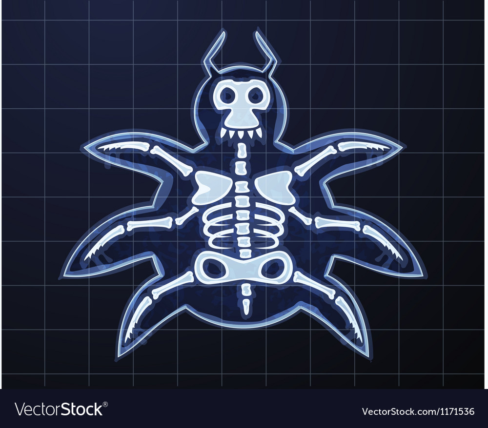 Bug vector image