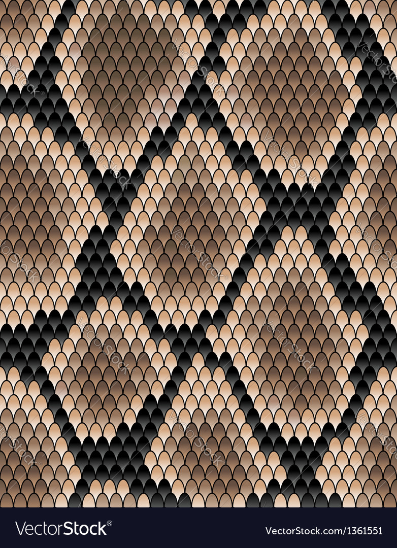 Seamless pattern of snake skin vector image
