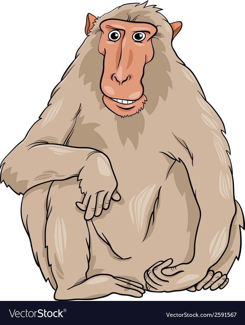 Macaquee animal cartoon vector image