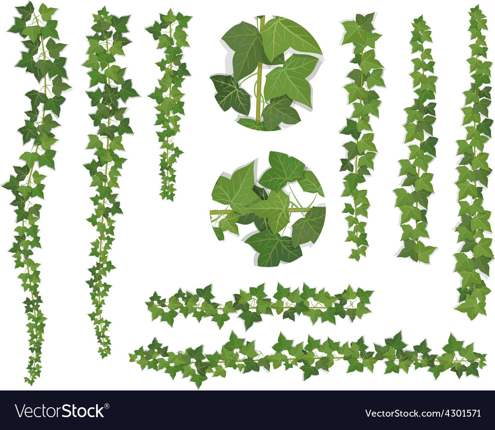 Set of brushes ivy vine branches vector image