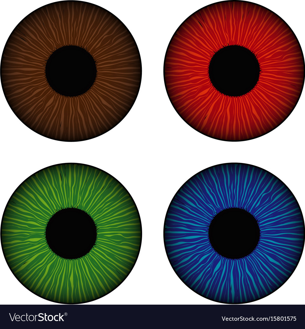 Set of human eyes iris isolated on white vector image