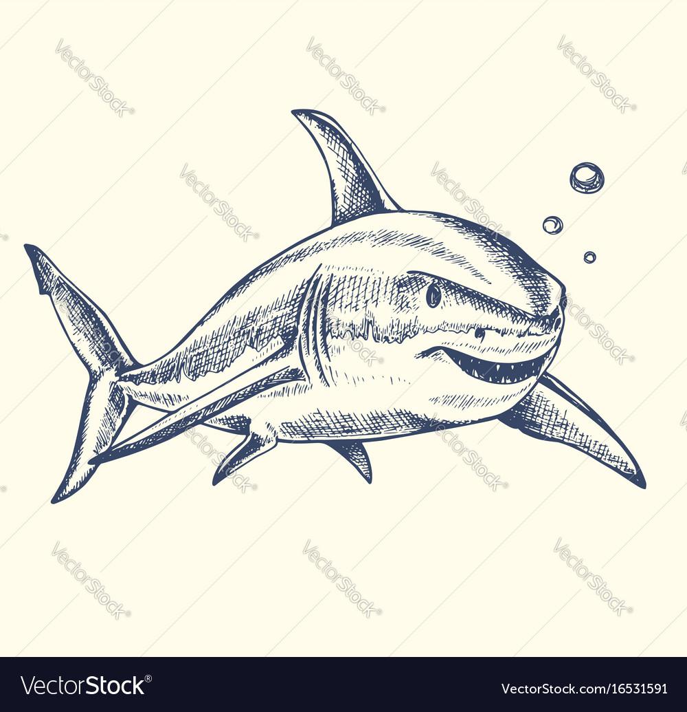Uncategorized Drawn Shark hand drawn shark royalty free vector image vectorstock image