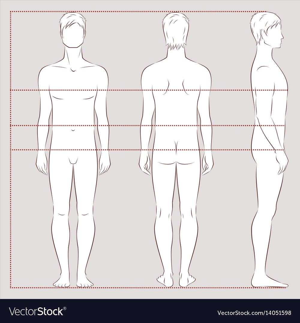 Mens body measurements vector image