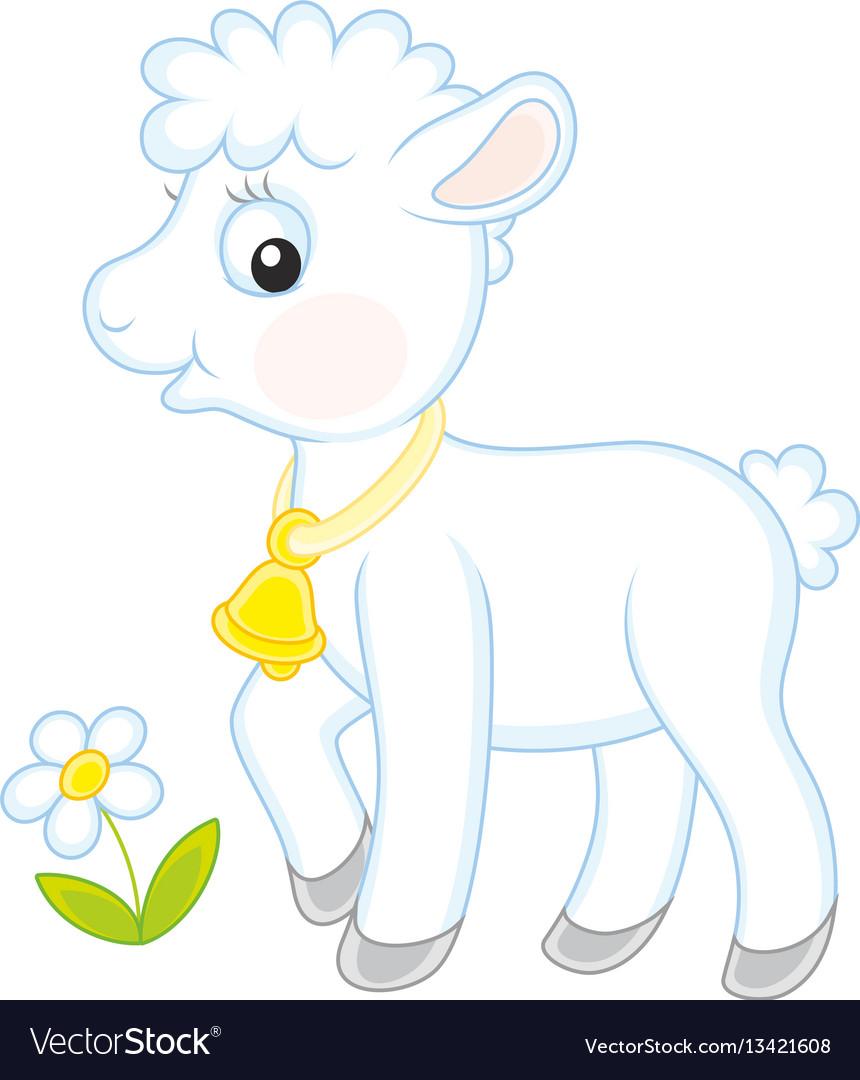 Small white lamb vector image