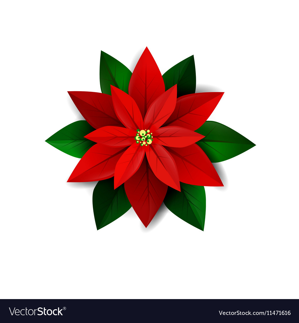 how to make a poinsettia leaves turn red
