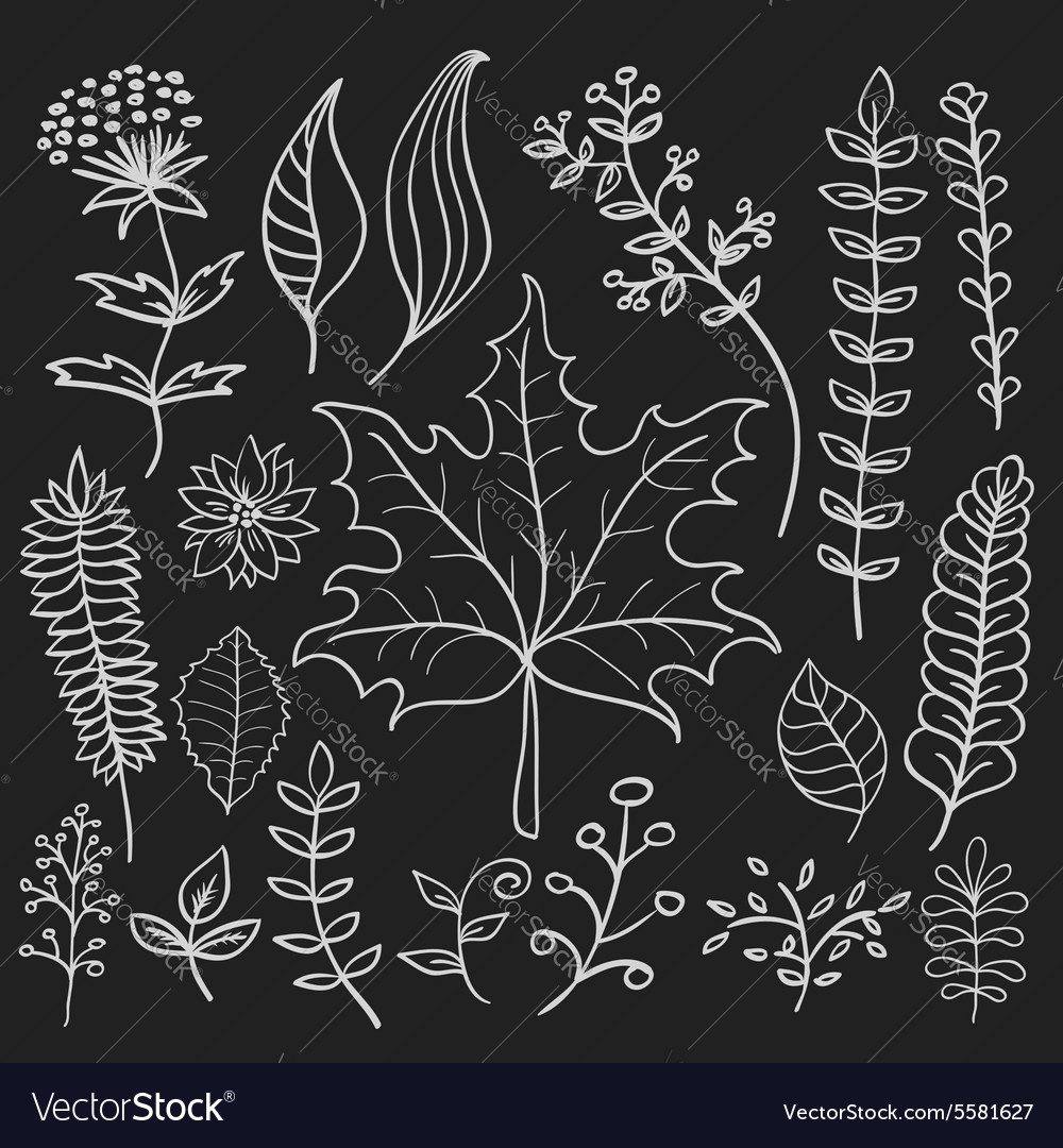 Hand drawn doodle leaves set vector image