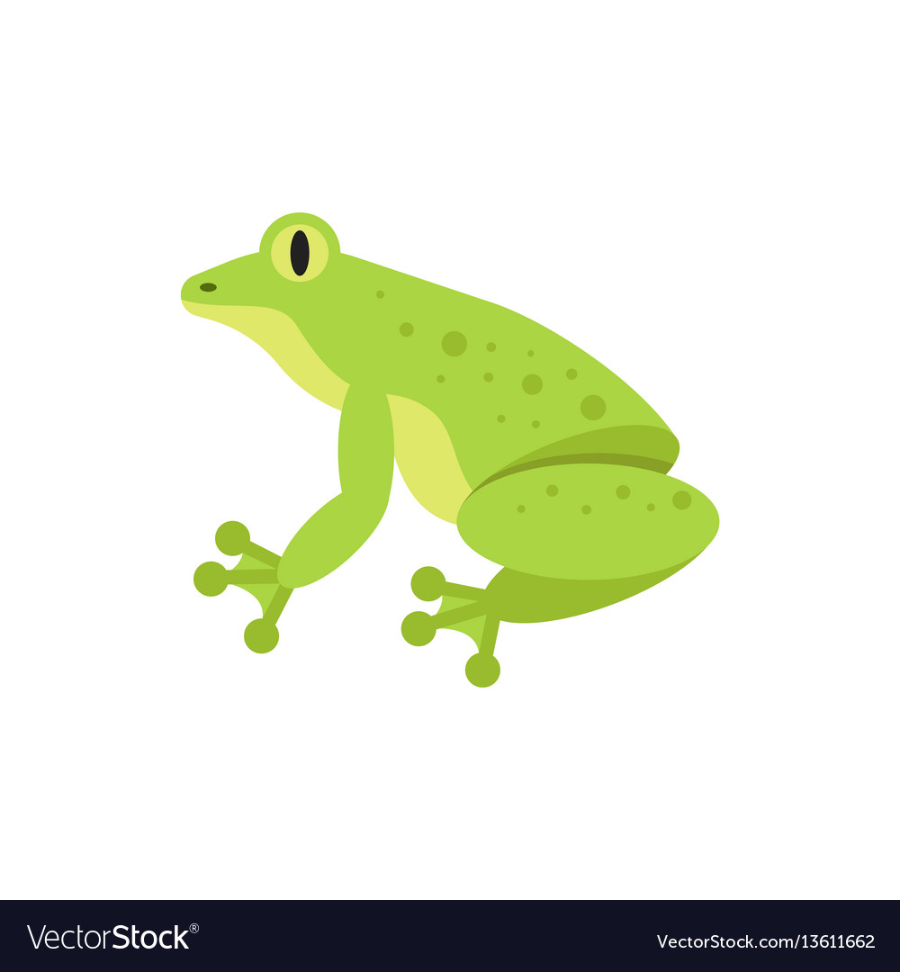 Flat style of frog vector image