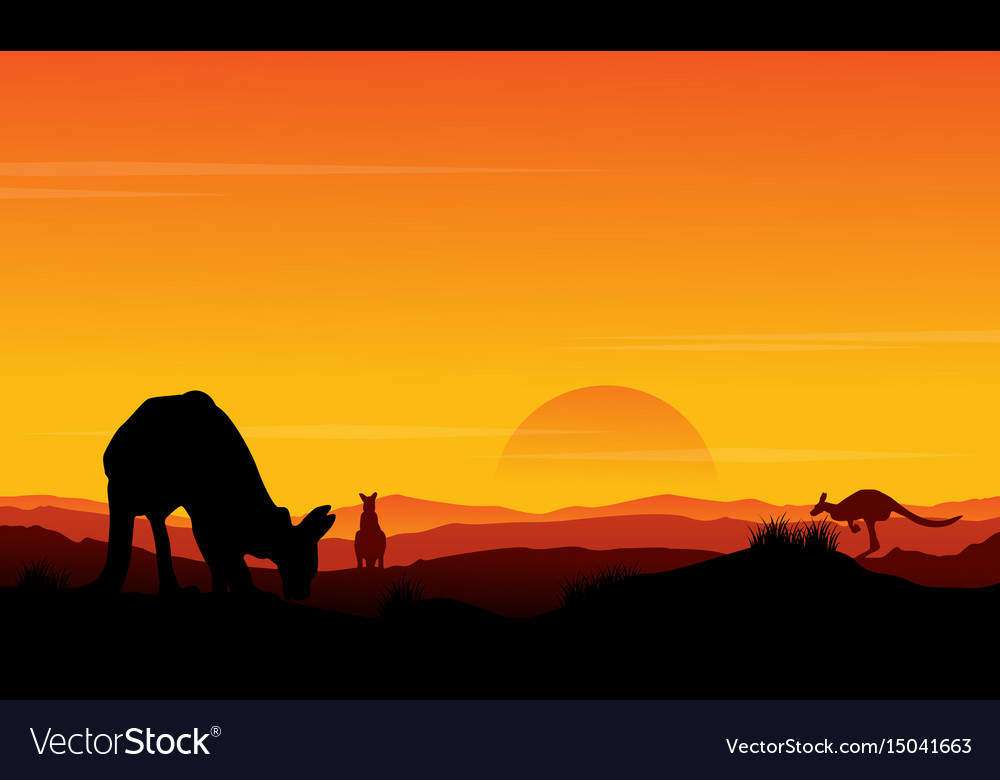 Silhouette kangaroo at sunset scenery vector image
