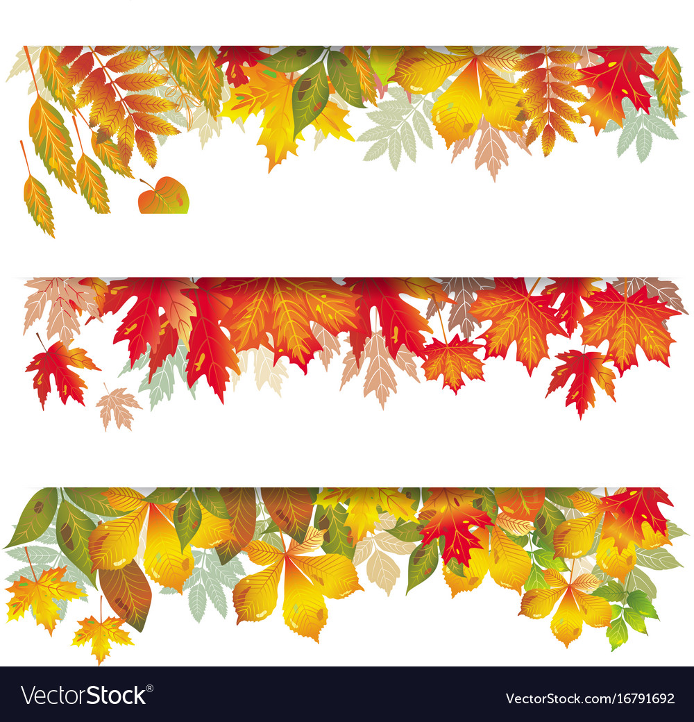 Seasonal banners of autumnal leaves vector image