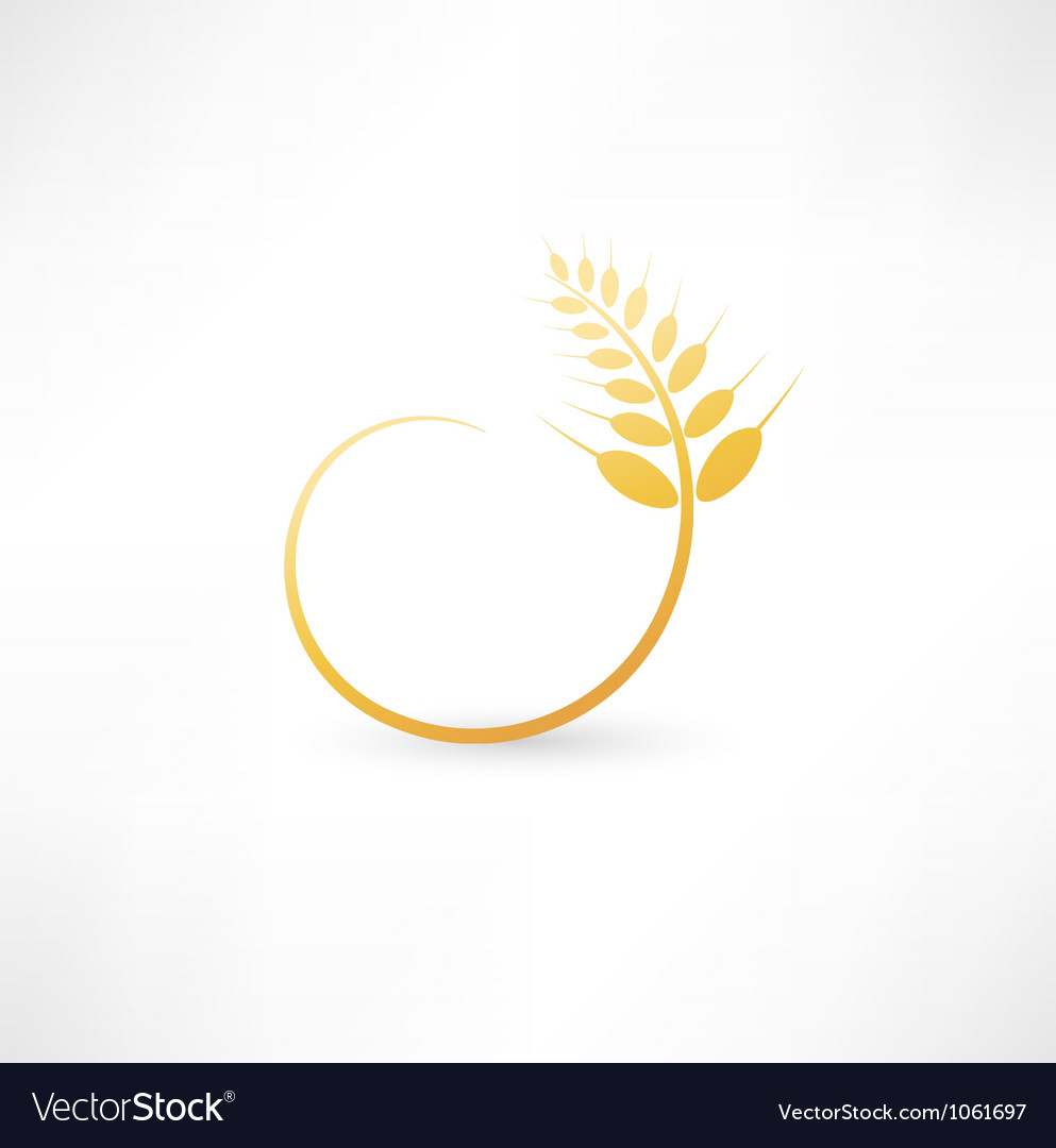 Wheat ears icon vector image