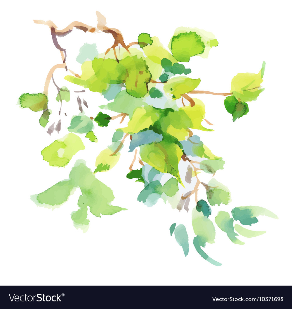 Watercolor branch with green leaves on white vector image