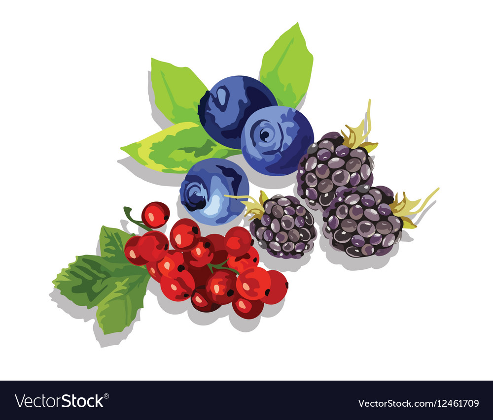 Blackberry blueberry and cranberry fruit set vector image