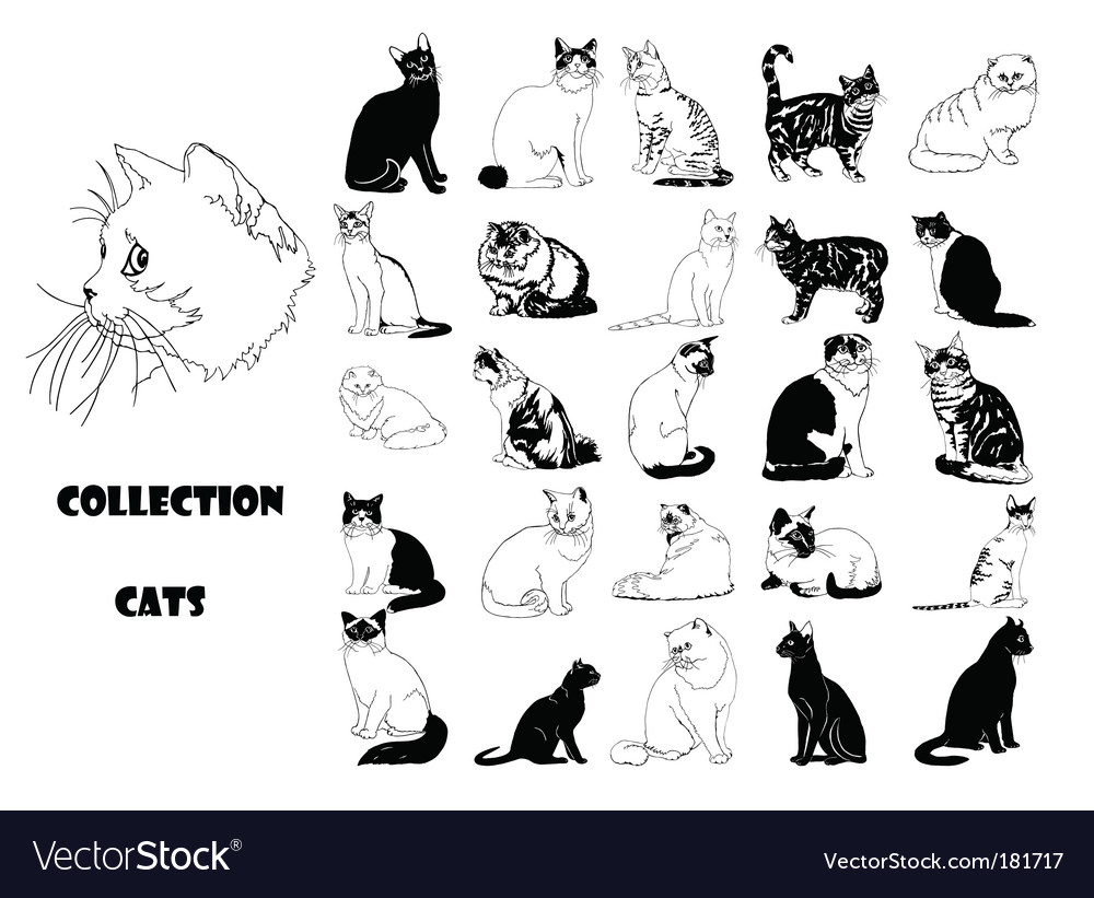 pictures of cats. Collection Of Cats Vector