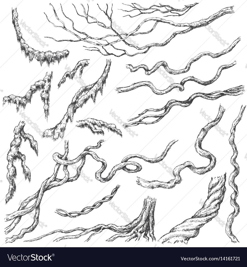 Liana branches sketch vector image