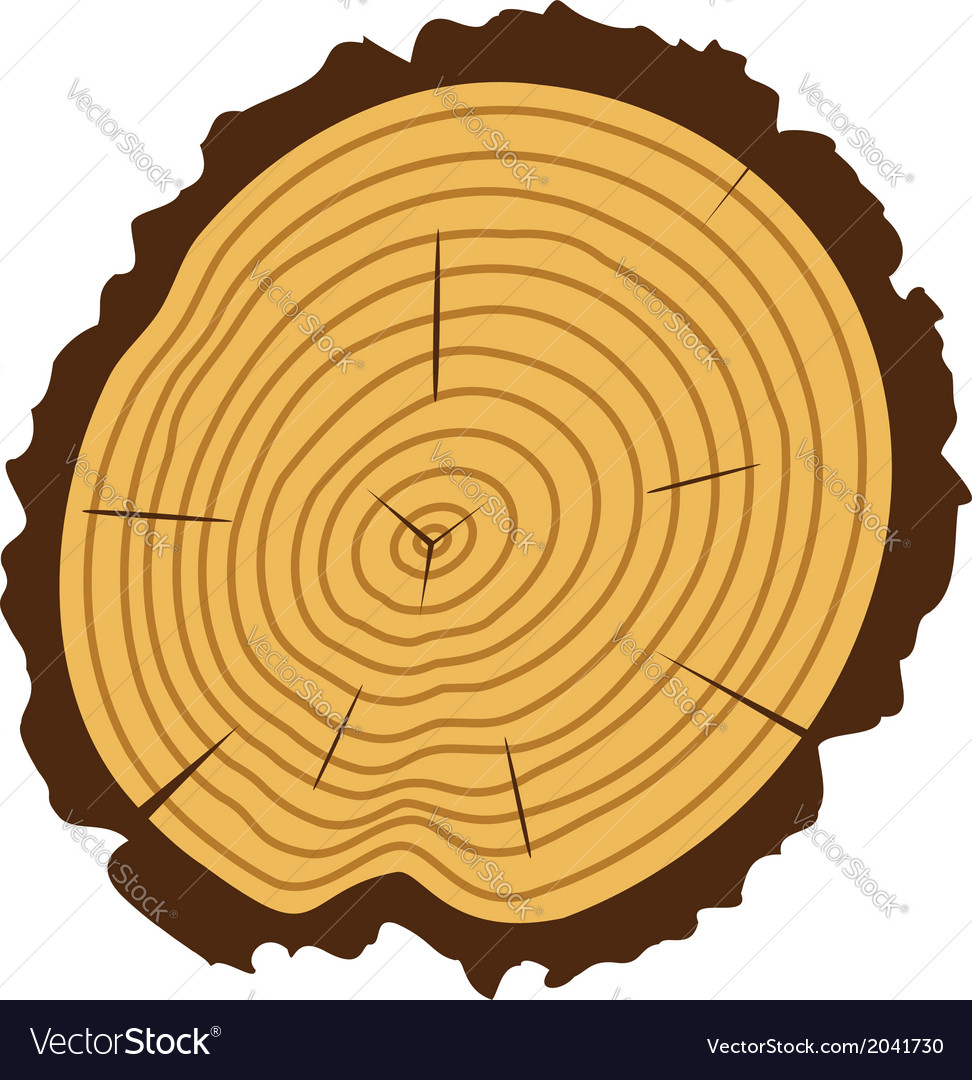 Wooden cut of a tree log vector image