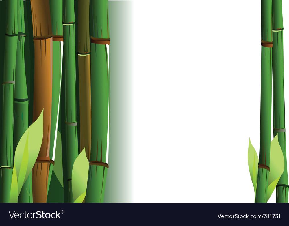 Bamboo shoots vector image