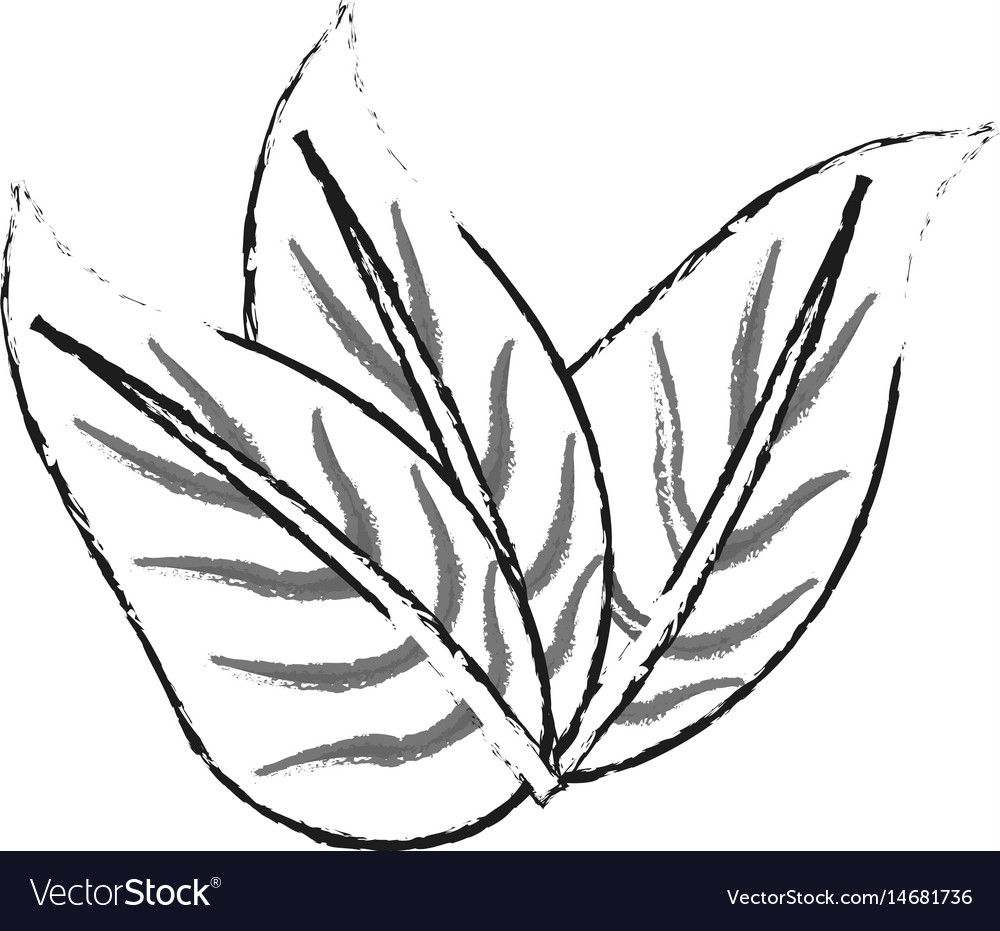Blurred silhouette image set leaves with vector image