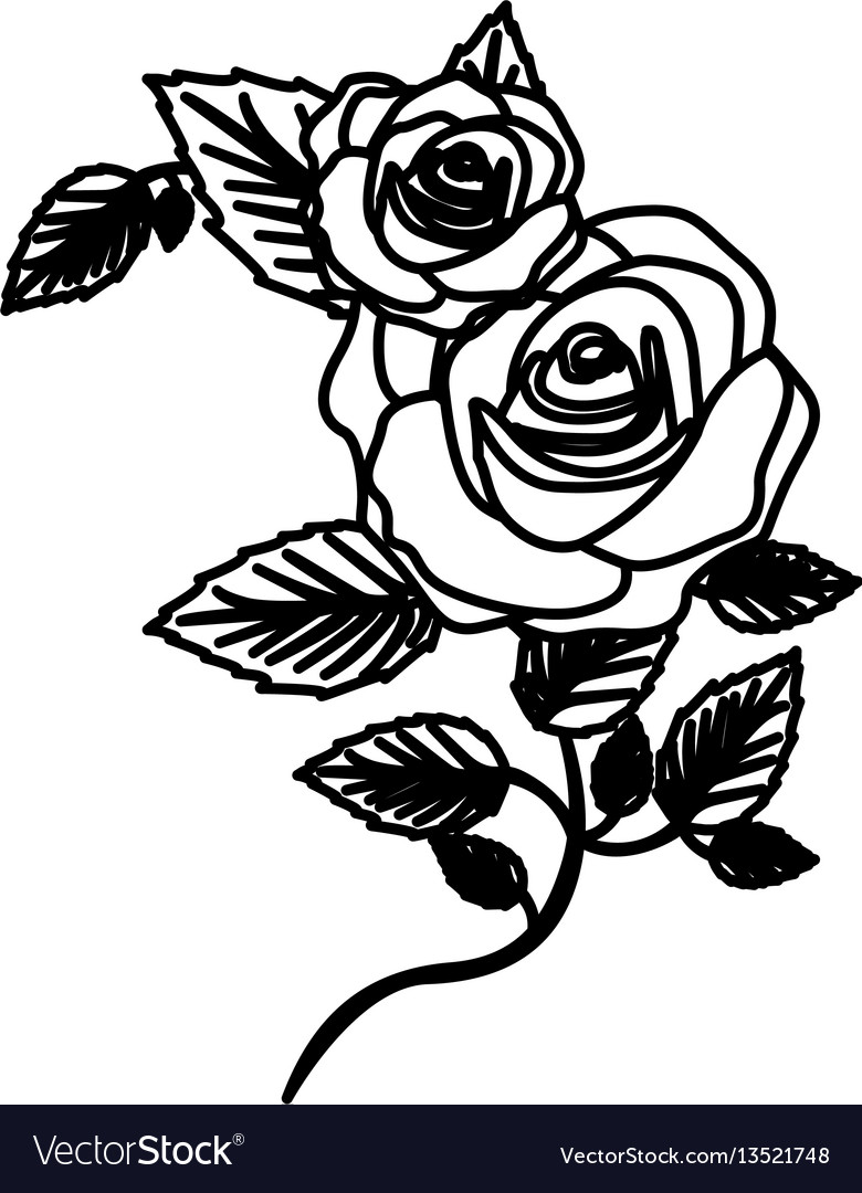 Figure roses with squere petals and leaves icon vector image